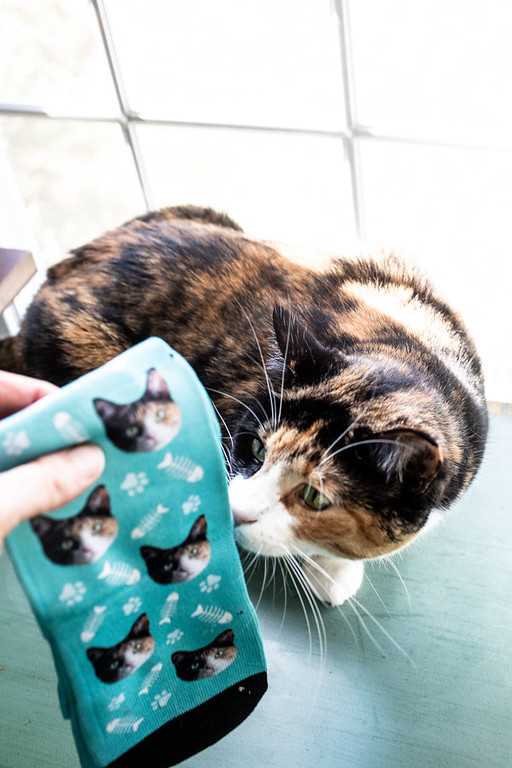 Calico cat and socks with her photo on it!