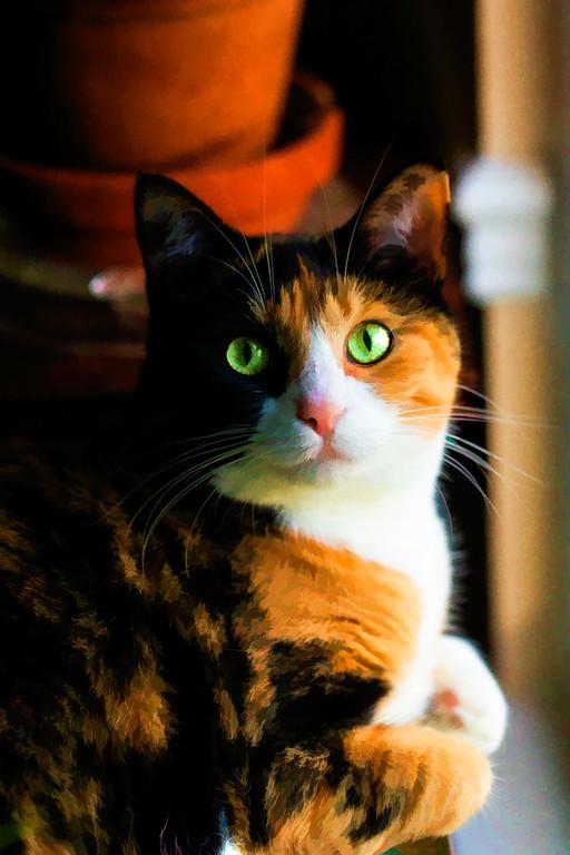 Calico cat edited using Topaz Labs plugin.