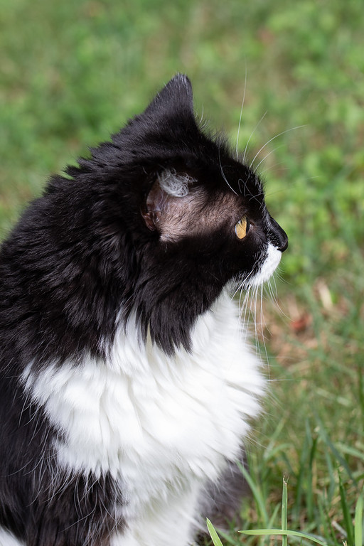 Profile photo of black and white cat.