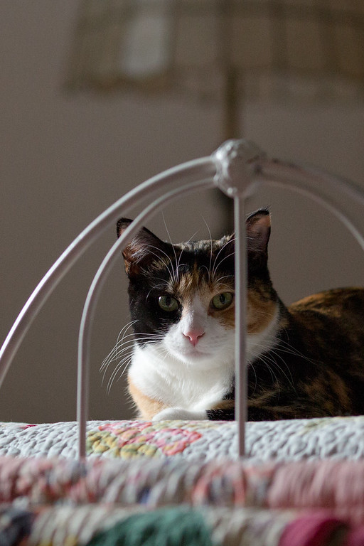 Calico cat on iron bed.