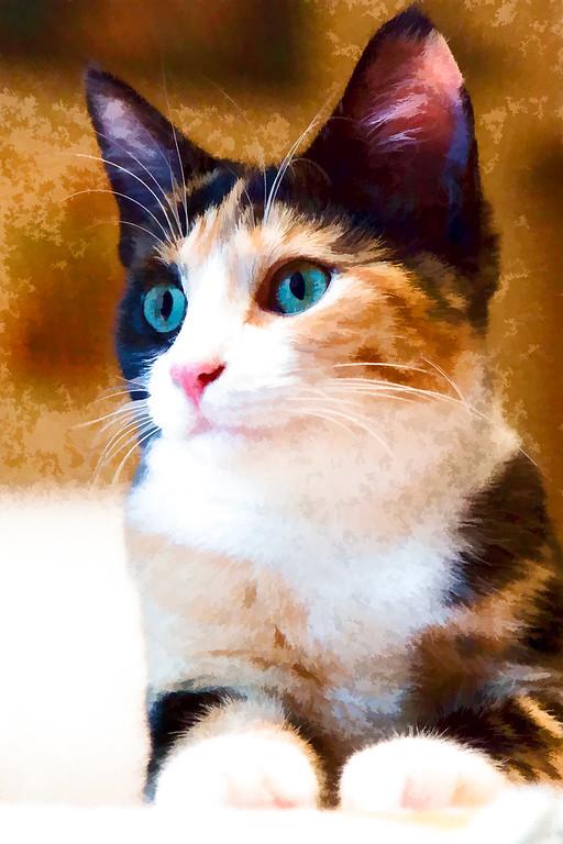 Calico cat edited with Topaz Labs plugin.