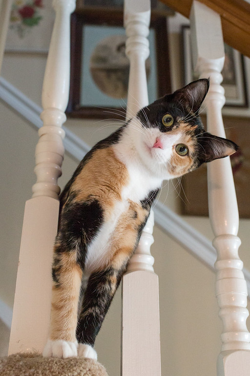 A calico cat looking through the rails of a staircase.