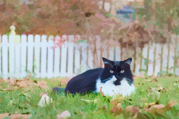 Black and white cat edited with Topaz Labs