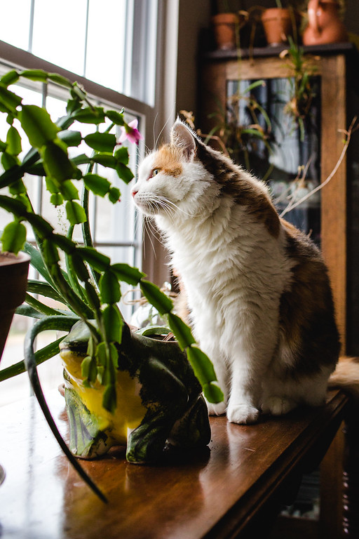 Calico cat on a table with some plants.