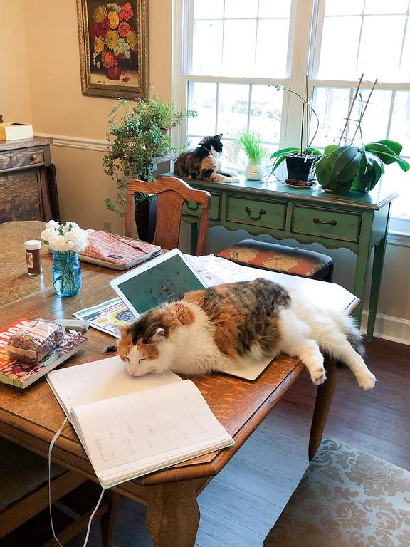 Calico cat sleeping on laptop