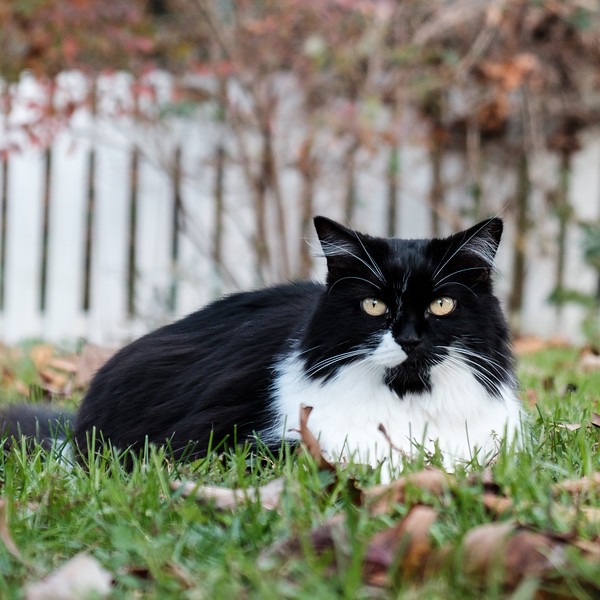 black and white cat on the grass