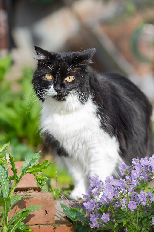 Black and white cat with purple flowers.