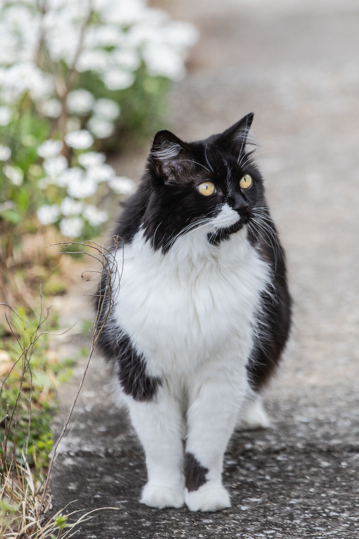 Black and white cat on sidewalk.