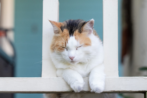 Calico cat sleeping on porch rails.