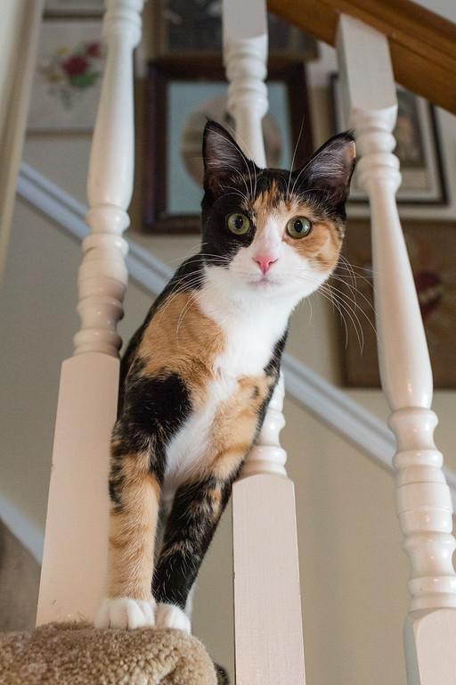 A calico cat peeking through the stair rails.