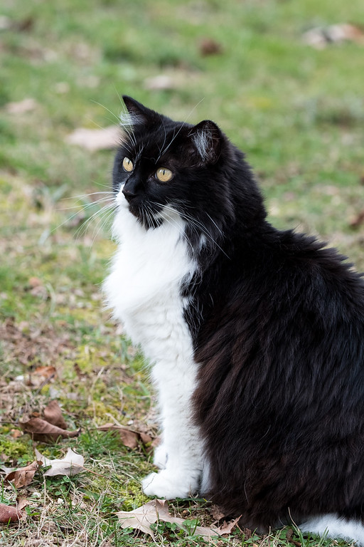 Black and white cat outside
