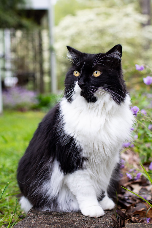 Black and white cat sitting on a path outside.