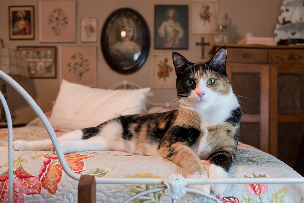 Calico cat on old wrought iron bed.