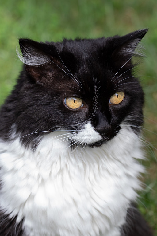 Black and white cat.