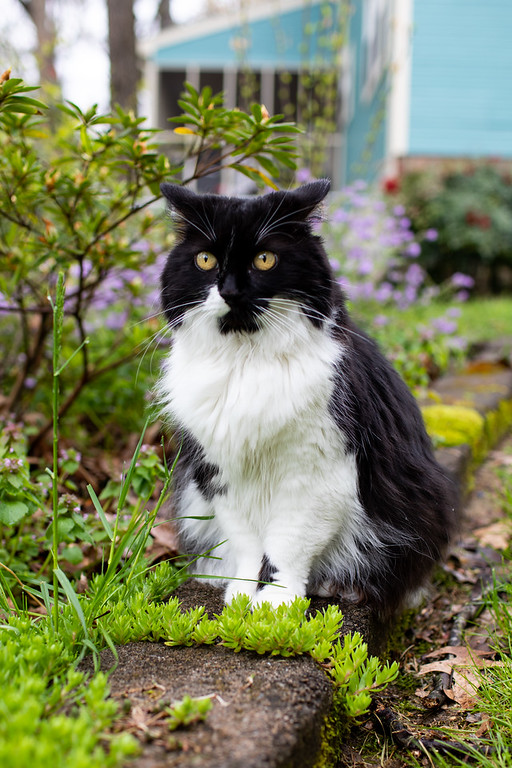 Black and white cat sitting on stone pathway.