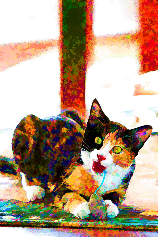 Calico kitten edited with topaz labs.