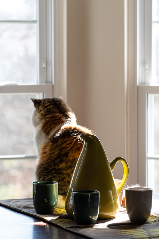 Calico cat looking out a window.