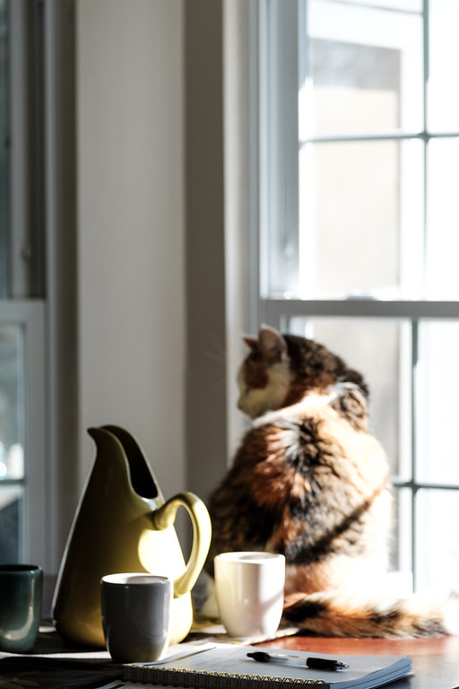 Calico cat with sun streaming in a window.