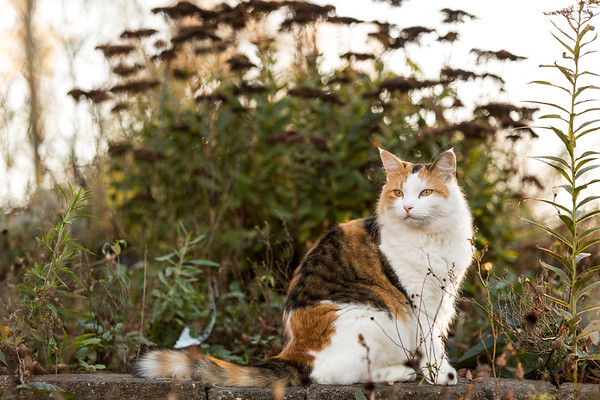 Calico cat with fall plants around her.