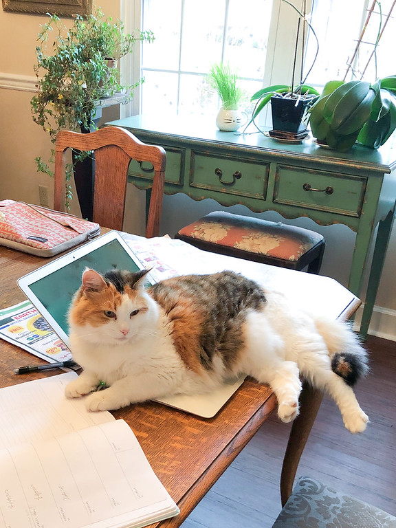 Calico cat laying on laptop.
