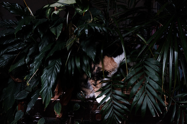 Calico cat in houseplants