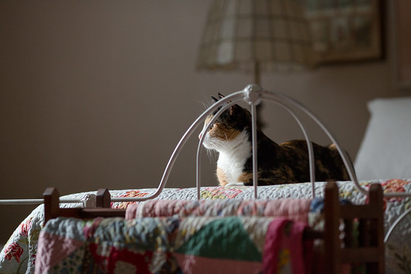 Calico cat looking out window on bed.