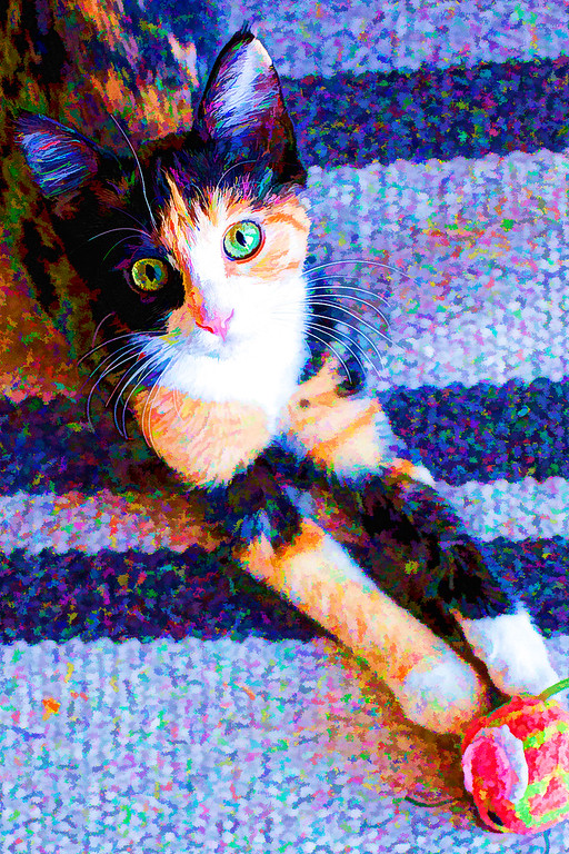 Calico kitten edited with Topaz Labs Plugin.