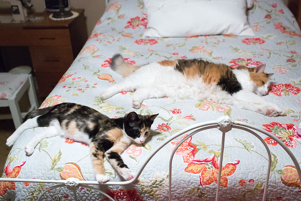 A calico cat and kitten laying on a bed.