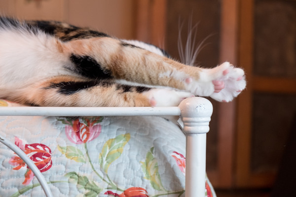 Cat stretching on old iron bed.