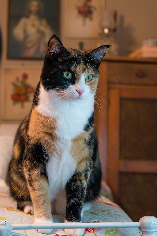 Calico cat sitting on a bed.