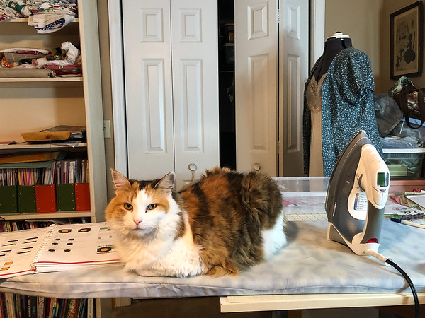 Calico cat on an ironing board.