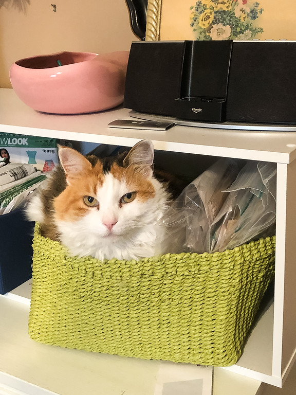 Calico cat in a bright green basket.