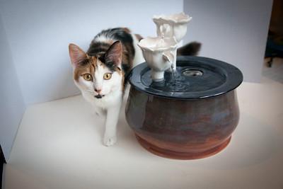 Cats&Fountain_80412-5048