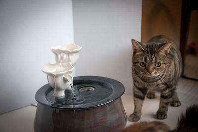 Cats&Fountain_80412-5038