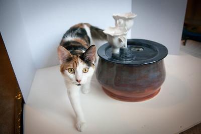 Cats&Fountain_80412-5049