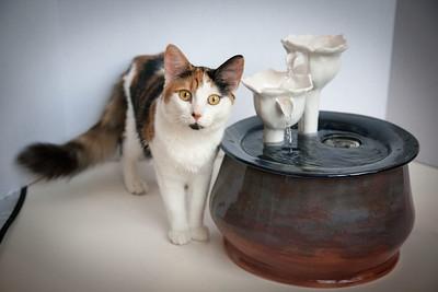 Cats&Fountain_80412-5030