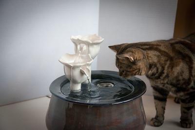 Cats&Fountain_80412-5039