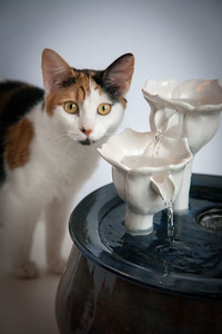 Cats&Fountain_80412-5025