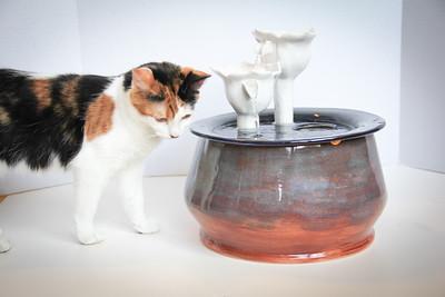 Cats&Fountain_80412-4870