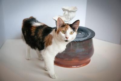 Cats&Fountain_80412-5033