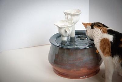 Cats&Fountain_80412-5018