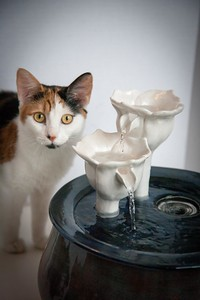 Cats&Fountain_80412-5027