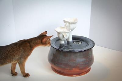 Cats&Fountain_80412-4862