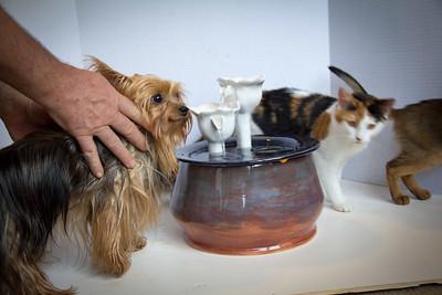 Cats&Fountain_80412-4880
