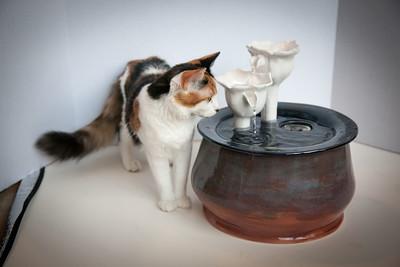Cats&Fountain_80412-5028