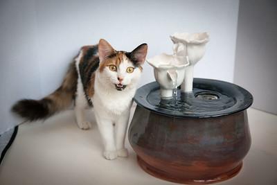 Cats&Fountain_80412-5029