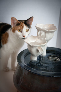 Cats&Fountain_80412-5024