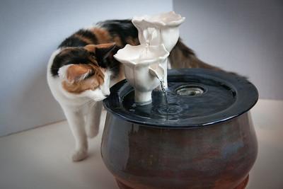 Cats&Fountain_80412-5044