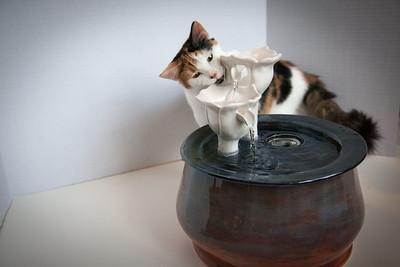 Cats&Fountain_80412-5043