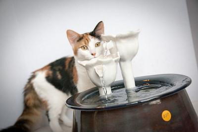 Cats&Fountain_80412-5022